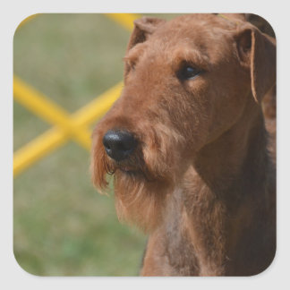 Really Cute Airedale Terrier Square Sticker