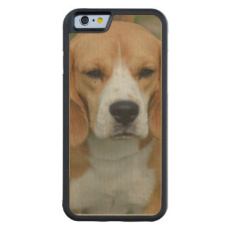Really Cute Beagle Pup Carved® Maple iPhone 6 Bumper Case