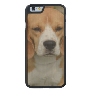 Really Cute Beagle Pup Carved® Maple iPhone 6 Slim Case