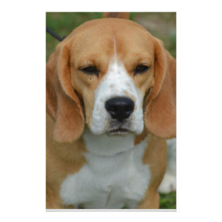 Really Cute Beagle Pup Personalized Stationery