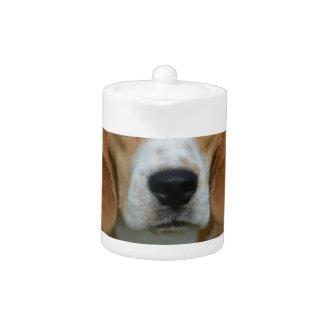 Really Cute Beagle Pup