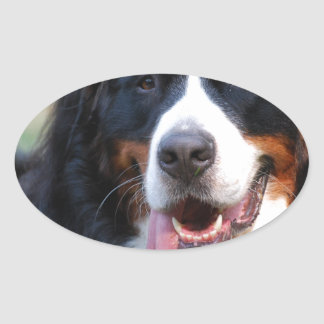Really Cute Bernese Mountain Dog Oval Sticker