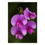wild, flower, pink, macro, close-up, photo,