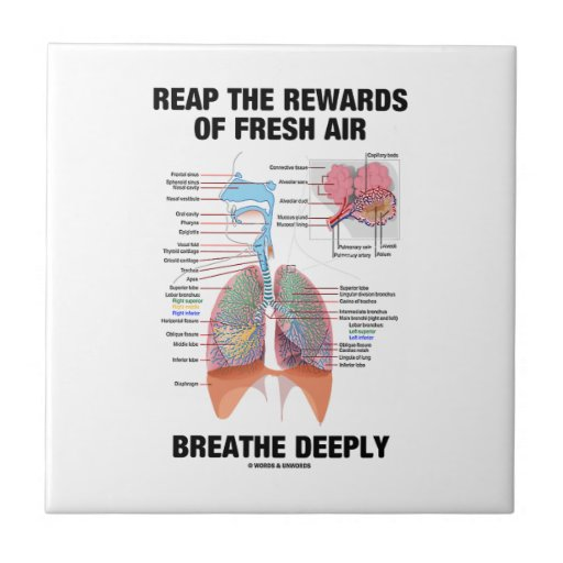 Reap The Rewards Of Fresh Air Breathe Deeply Ceramic Tile