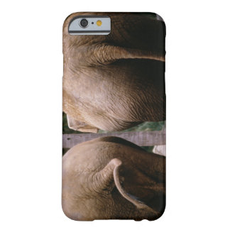 Rear view of Asian elephants Barely There iPhone 6 Case