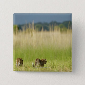 Rear view of Leopard (Panthera pardus) and cub Pinback Button