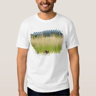 Rear view of Leopard (Panthera pardus) and cub Shirts