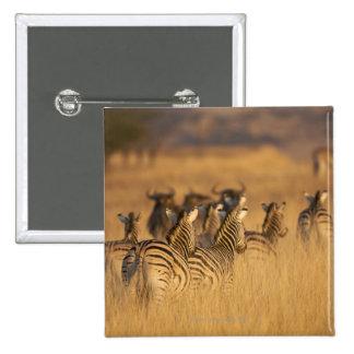 Rear view of Plains Zebra (Equus quagga), Tala Pinback Button
