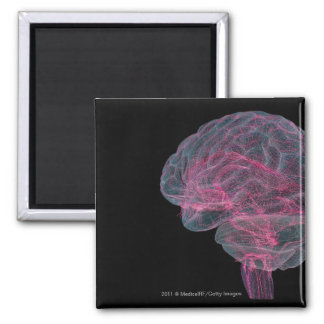 Rear view of the human brain 2 inch square magnet