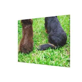 Rear view of two Dachshund dogs Canvas Print