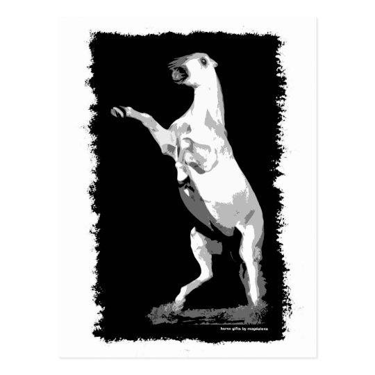 Rearing Andalusian Stallion Postcard