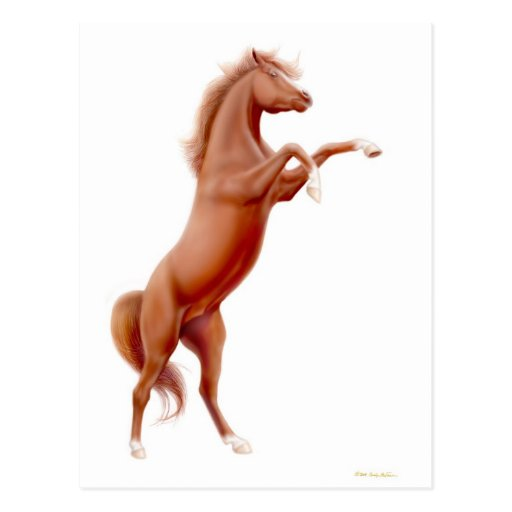 Rearing Chestnut Horse Postcard