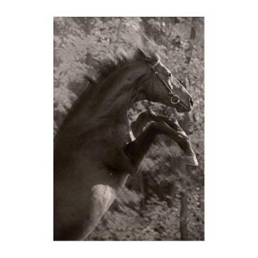 anakondasp rearing horse acrylic wall art