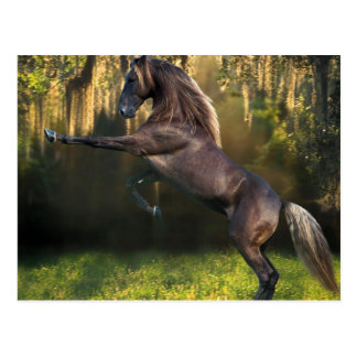 Rearing Stallion Postcard