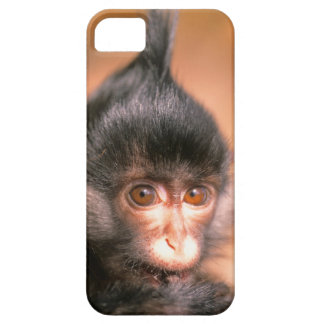 recent tuft one gift (4 Mon.) Little monkey, iPhone SE/5/5s Case