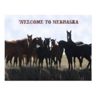 Recepción a la postal de Nebraska
