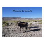 Recepción a la postal de Nevada con 2 burros