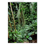 Recepción a la selva tarjeton