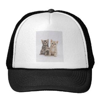 Recepción de los gatos gorras
