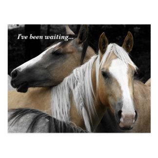 Recepción del estudiante de los caballos de la pos postal