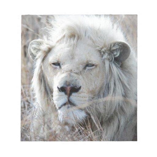 Reclinación blanca africana del león blocs de notas