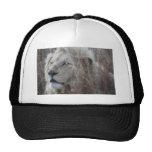 Reclinación blanca africana del león gorros