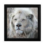 Reclinación blanca africana del león caja de regalo cuadrada grande