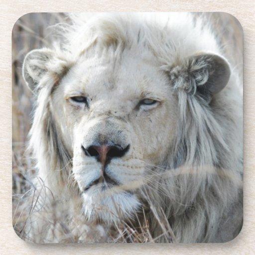 Reclinación blanca africana del león posavasos de bebida