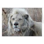 Reclinación blanca africana del león tarjeta de felicitación