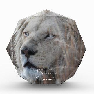 Reclinación blanca africana del león