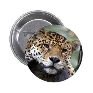Reclinación de Jaguar Pin Redondo De 2 Pulgadas