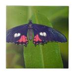 Reclinación de la mariposa tejas  ceramicas