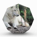 Reclinación de White Wolf