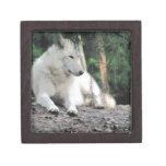 Reclinación de White Wolf Caja De Regalo De Calidad