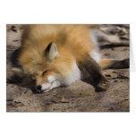 Reclinación del Fox rojo Felicitaciones