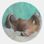 Reclinación del orangutang del bebé pegatina redonda
