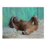 Reclinación del orangutang del bebé postal