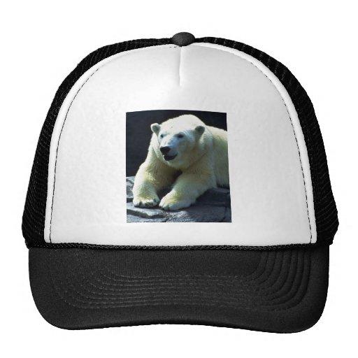 Reclinación del oso polar, frontal gorro