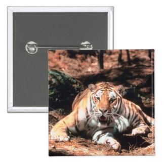 Reclinación del tigre pin cuadrado