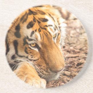 Reclinación del tigre posavasos diseño