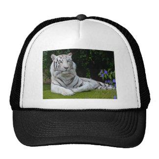 Reclinación hermosa blanca del gato de tigre de gorras de camionero