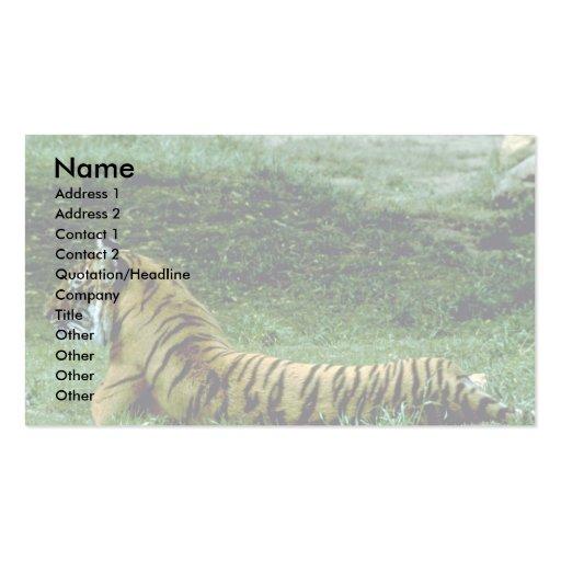 Reclinación integral del tigre, perfil tarjetas de visita
