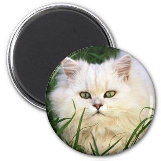 Reclinación linda del gatito imán redondo 5 cm