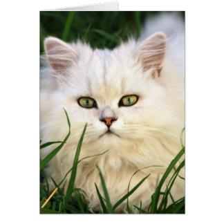 Reclinación linda del gatito tarjeta de felicitación