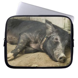 Reclinación negra del cerdo funda computadora