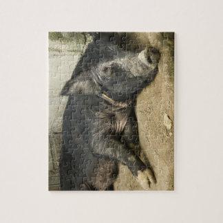 Reclinación negra del cerdo puzzle con fotos
