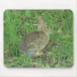 Reclinación salvaje del conejo mouse pads