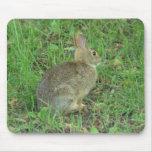 Reclinación salvaje del conejo tapetes de ratones