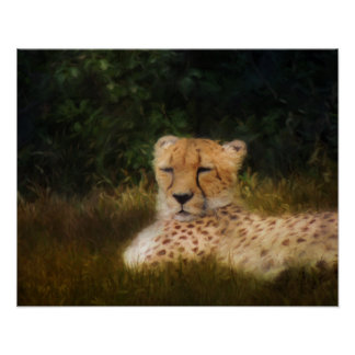 Reclining Cheetah at Fossil Rim Poster