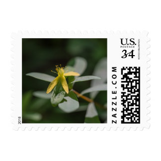 Reclining St. Andrews Cross Wildflower Stamps
